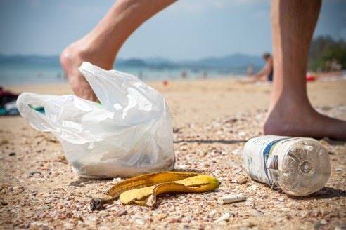 Education and Beach Clean-up