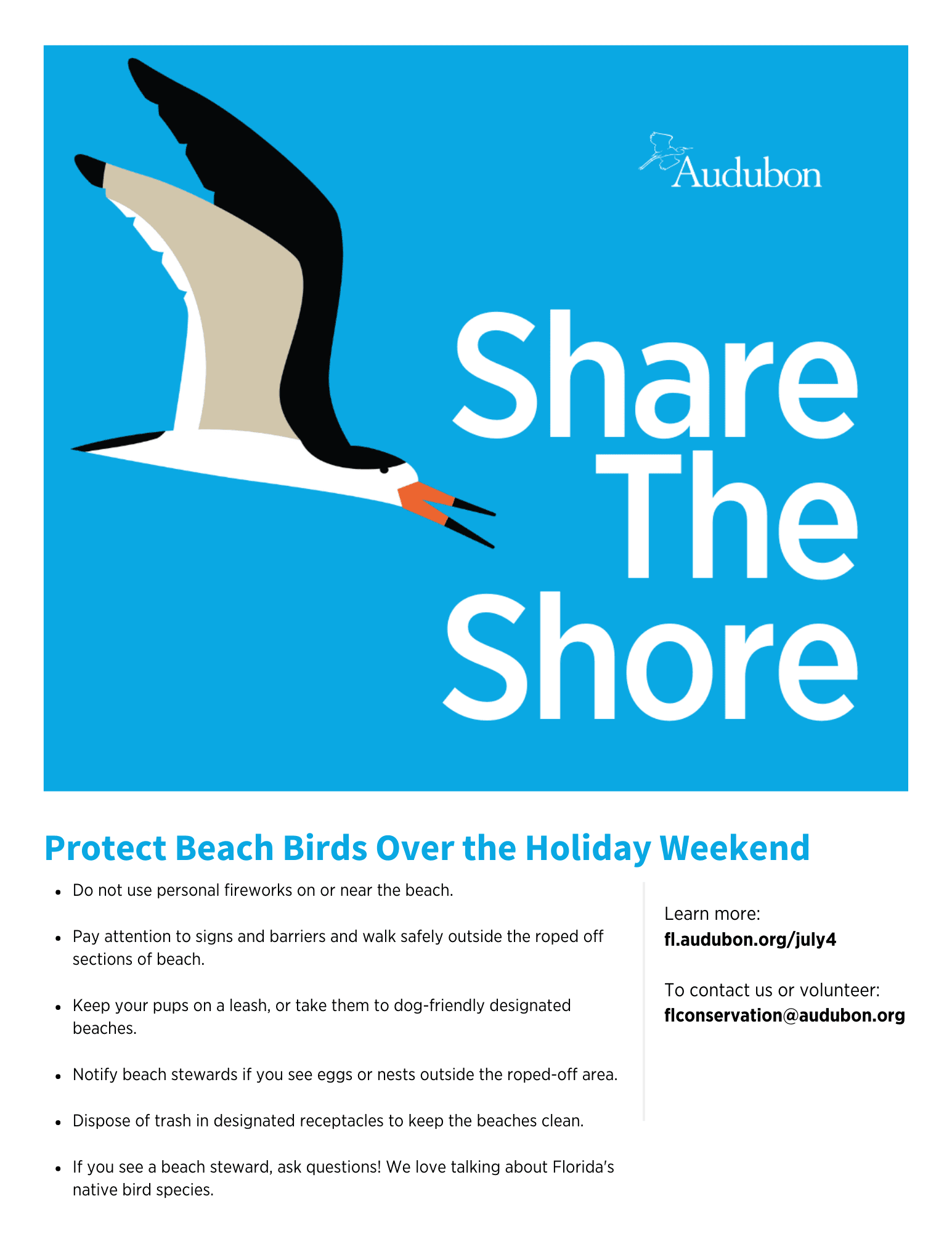 July 4 Flyer Black Skimmers